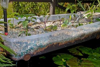 Let the aquaponics begin prepperfortress for Aquaponics pond