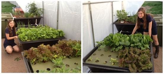 Endless food systems fish powered aquaponic gardens for Aquaponics fish food