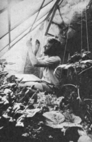 greenhouse-195x300
