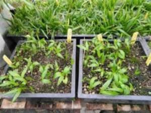 7 Reasons Seeds Fail To Grow