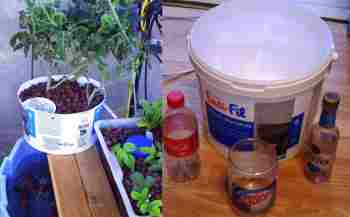 low-tech-5-gallon-bucket-aquaponics-1024x635