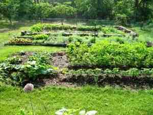 our-garden-300x225