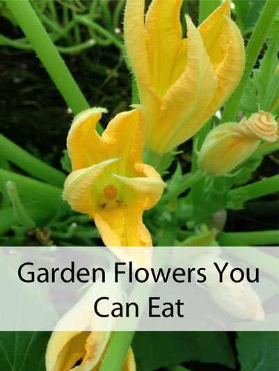 GardenFlowersYouCanEat