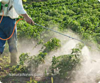 Organic Pest Control: What Works, What Doesn't