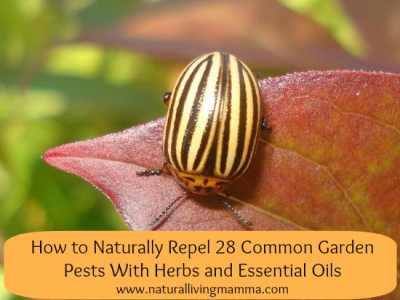 naturally-repel-garden-pests