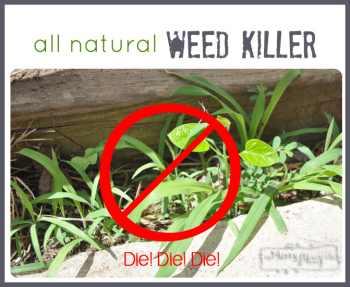 zap-weeds-with-vinegar