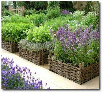 Garden-Ideas-500x454