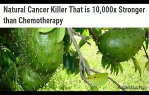 Scientists Confirm Graviola Cancer Cure Is Better Than Most Medicines In The Fight With Cancer! Natural Cancer Cell Killer 10,000 Times Stronger Than Chemotherapy!